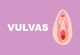 Vulvas